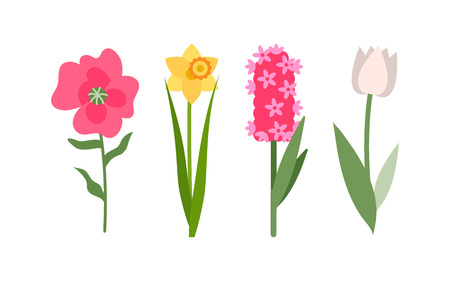 Flowers isolated icons set vector, yellow daffodil, white tulip and pink hyacinth. Flower with foliage, decoration and greeting with holiday, botanical