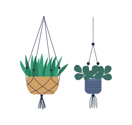Hanging pots with fishnet vector, special containers with soil for plants. Houseplants isolated set, flora floral variety, foliage and leaves of flowers