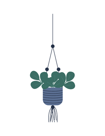 Plant growing in hanging pot botanical decoration for home. Floral decor leaves, houseplant vector, green wide foliage, isolated potted evergreen flowering