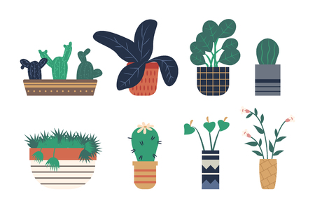 Hothouse representing plants vector, greenhouse houseplants set isolated flat style flora with foliage and leaves, floral decoration botanical flowers Illustration