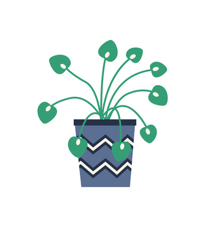 Plant growing in container for flowers vector, isolated houseplant with long stems and foliage. Frondage of botany, flora for home decoration flat style
