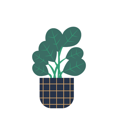 Houseplant vector, green wide foliage, isolated icon. Plant growing in pot with squared,  lines, botanical decoration for home. Floral decor leaves