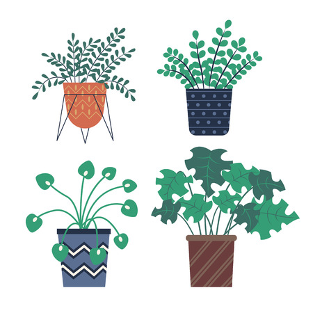 Plants growing in pots vector, herbs and foliage with different shape of leaves. Summer plantation, vegetation for home decor, vases for house set Illustration