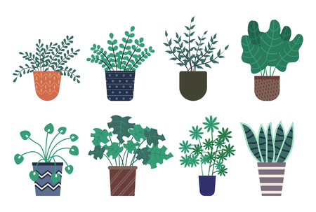 Decorative plants vector, isolated icons set, potted flowers with foliage of different shape and type. Botanical home decor, herbal plantation vegetation