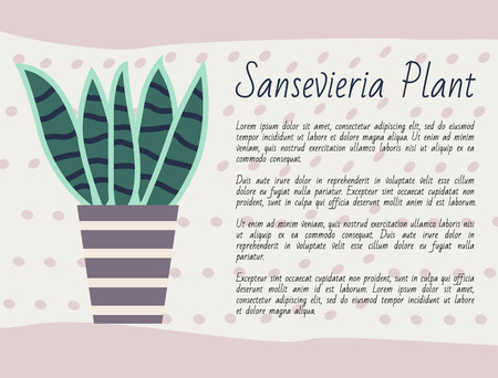 Sansevieria plant kind vector, potted flower with long leaves, green foliage houseplant with explanation, poster with text. Nature at home, flower pot