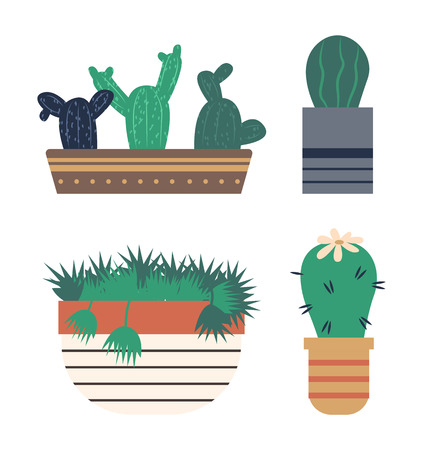 Potted plant with thorns vector, cactus with flower blooming, large flowering on top of cacti. Pot with lines, botanical decor for home houseplants