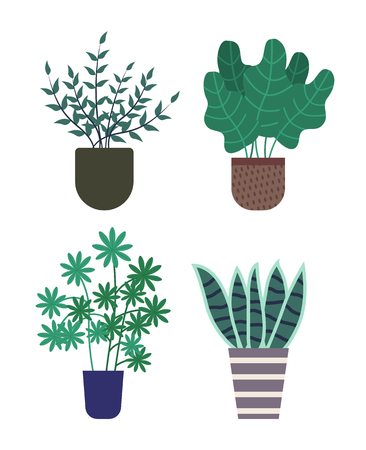 Haworthia growing in pot vector, isolated icon of kinds of houseplants. Decoration for home, decorative herbs foliage and flora of different type