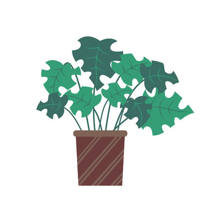 Plant with broad leaves vector, stylish decor for home interior. Decoration natural flower growing in pot with stripes ornaments, brown container