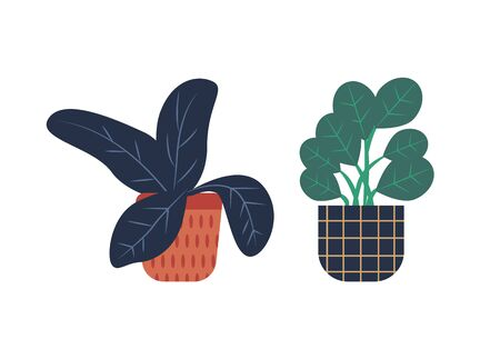 Flora growing in pots vector, floral decoration for home vector, herbal set isolated. Natural decor, leafy plant, houseplant in containers flowerpots 向量圖像