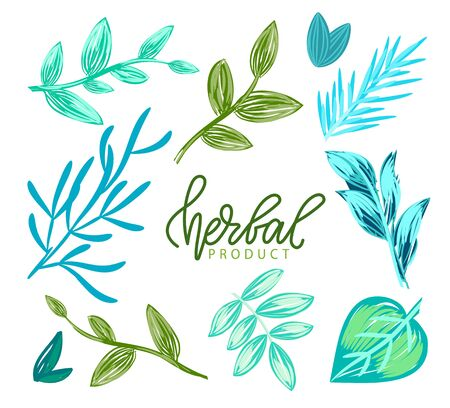 Herbal product vector, green and blue hues of foliage and flora of plants, healthy ingredients and organic base of productions greenery and freshness