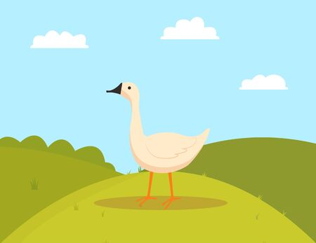 Goose on grass, walking farm bird character, side view of white countryside animal, duck or fowl outdoor, poultry eating on hills, farming vector