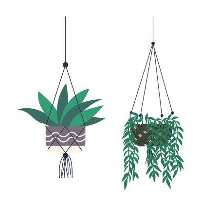 Flowers for home decor vector, set of woody lianas plant flat style, isolated flowerpot hanging on thread. Greenhouse floral decoration flat style
