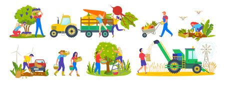 Husbandry and harvest vector, tractor and products, garden farme, carrots and beetroots pumpkin and veggies vegetables farmers working on land gathering apples. Agricultural drone applied to farming