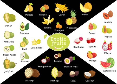 Tropical fruits vector, kiwano and avocado, durian and kumquat. Rambutan and mangosteen, marang and pomelo, soursop and carambola, ambarella poster. Exotic fruit for market, supermarket and vegan menu 일러스트