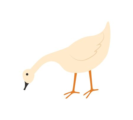 Goose vector, isolated bird with plumage, domestic animal eating crops from ground, countryside area, poultry farming and tending flat style livestock