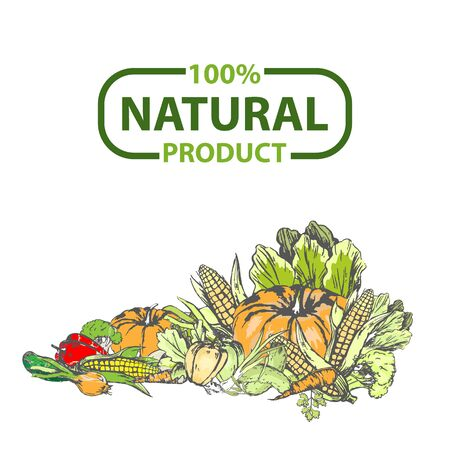 Organic food fresh vector, pumpkin and corn, sweet red pepper and foliage, onion banner. Logotype of eco organic ingredients drawing flat style veggie. 100 percent natural product