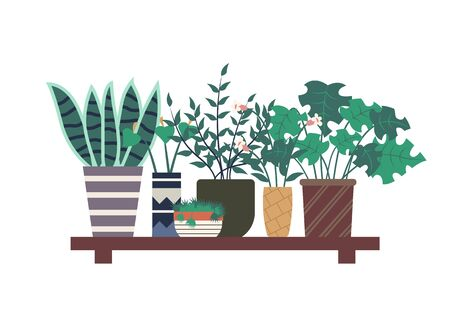 Orangery plants vector, wooden shelf with floral decor flat style. Potted houseplants, botanical herbs, flowers with foliage and wide leaves in pots