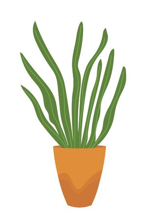 Green house plant in pot isolated on white. Vector home decorative element, herb or grass in flowerpot. Floral element with leaves in vase, houseplant
