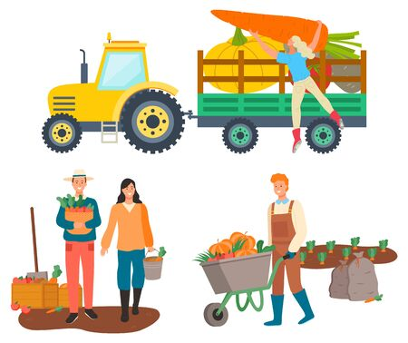 People working on farm vector, isolated tractor with character loading beetroots and carrots. Personage with harvested products, cart with pumpkin Illustration