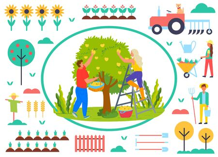 People working in garden vector, man and woman picking pears from tree on farm. Sunflowers and tractor, scarecrow and personage with rakes, carrots and spade. Farmers work