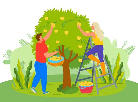 Farmers in garden vector, man and woman picking pears fruits in orchard. Farming people harvesting in summer, foliage and flora of countryside flat style Vettoriali