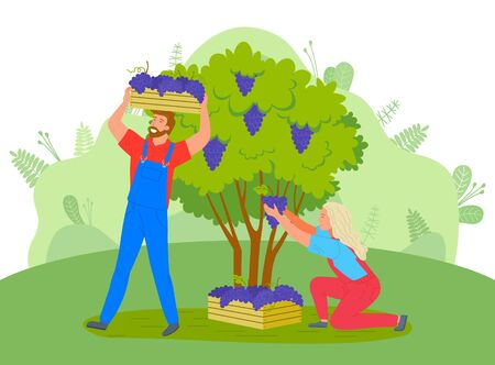 People gathering grapes vector, rural workers carrying harvested berries in wooden containers. Man and woman, agricultural characters countryside