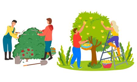 Man and woman working in garden vector, people trimming bushes of roses. Picking yellow pears, farming personage harvesting season summertime works Ilustração