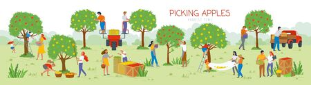 People picking apples in garden vector, man and woman gathering fruits from trees. Trucks and cars for transportation of food, summertime farming. Picking apples from tree to basket. Harvest festival