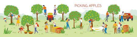 Persone che raccolgono mele nel vettore giardino, uomo e donna che raccolgono frutti dagli alberi. Camion e automobili per il trasporto di cibo, agricoltura estiva. Raccogliere le mele dall'albero al cesto. Festa del raccolto