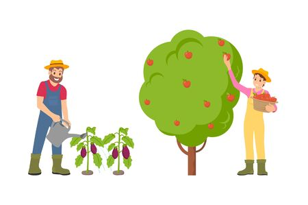 Farmers man and woman on plantation set vector. Female gathering ripe apples from fruit tree, male watering aubergine vegetables on ground with can Illustration