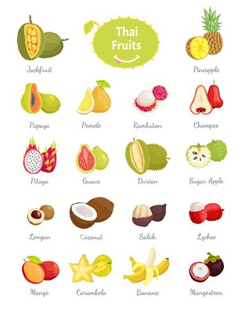 Thai fruits set of lush food vector. Longan and sugar apple, salak and coconut, citron and carambola. Chompoo and pomelo, papaya and pineapple durian Vettoriali