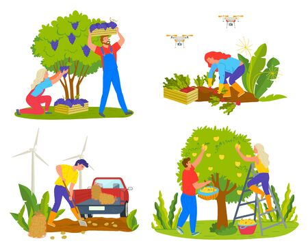 Harvesting people on field vector, man and woman picking grapes. Lady working on plantation with carrots, male harvest potatoes, pear trees fruits Ilustração