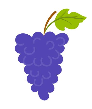 Vineyard with leaf, purple seedless bubo, viticulture element of decoration. Grapes on wooden stick, winemaker industry, grapevine symbol, farming vector