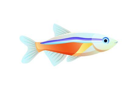 Bright neon tetra fish isolated on white poster, vector illustration of exotic colorful marine habitant with orange stain and blue stripe on flesh
