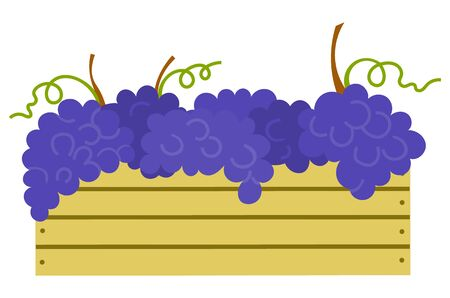 Wooden container with ripe purple grapes isolated icon. Vector vineyard fruits, seedless bubo, viticulture element. Winemaker industry, grapevine symbol, farming vector