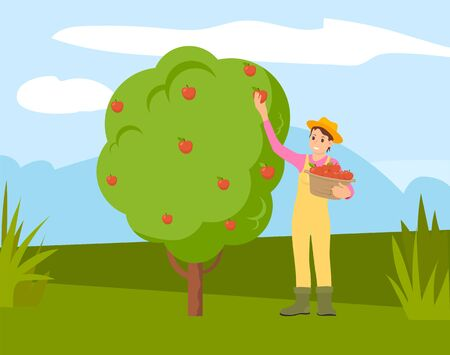 Farmer man gathering apples from tree into basket, cartoon person. Vector guy in straw hat works on farm, green grass and healthy organic fruits