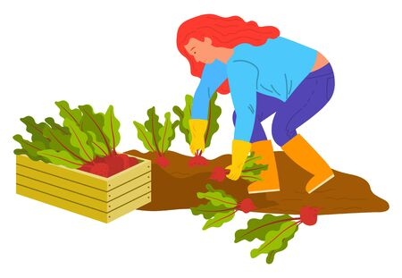 Woman agricultural worker planting or harvesting radish or beet. Fresh rustic vegetable, farmer female wearing rubber gloves and boots working on ground, gardening vector. Flat cartoon