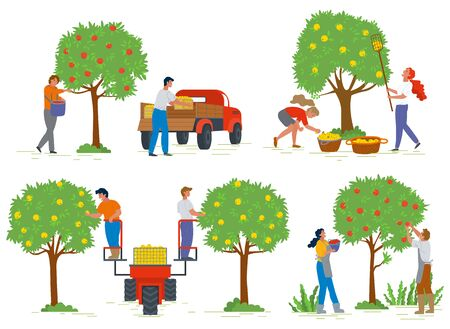 People harvesting apples from trees, agricultural work. Man and woman characters gardening, fruit in basket, gardener and rustic food, countryside vector. Picking apple concept. Flat cartoon
