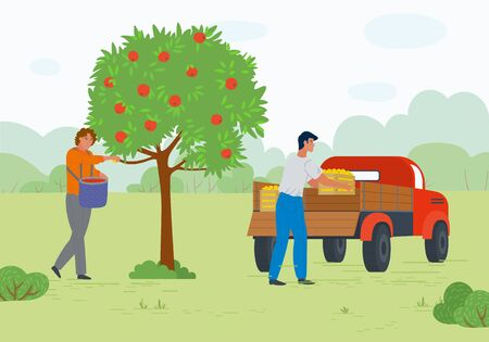 Man and woman harvesting apples, full containers, transportation fruit. People in orchard, gardener and automobile, green tree, countryside vector. Picking apple concept. Flat cartoon