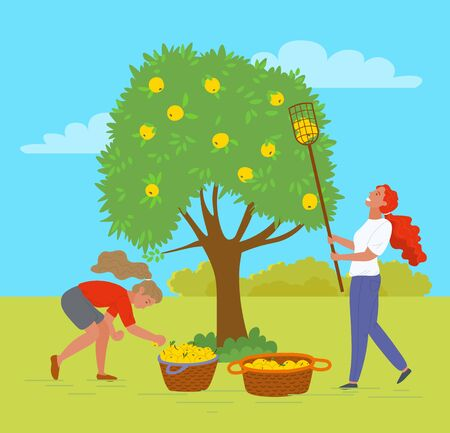 Woman working in garden together vector, female with special tool to reach apple on top of tree. Baskets with organic products meal in containers. Pick apples concept. Flat cartoon