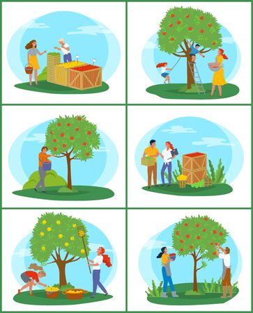 People working in garden vector, man and woman on market. Family by apple tree picking fresh fruits from top. Containers for storing, harvesting season. Pick apples concept. Flat cartoon
