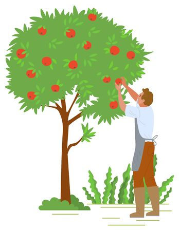 Agriculture gardener vector, isolated fruit tree with red apples. Flat style character working with plants in autumn, harvesting season reaching peak. Picking apples concept. Flat cartoon Stock Illustratie