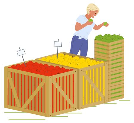 Young blond girl in blue jeans putting fruits in wooden boxes isolated in white. Containers with red, yellow and green apples vector illustration. Picking apples concept. Flat cartoon Фото со стока - 129655826