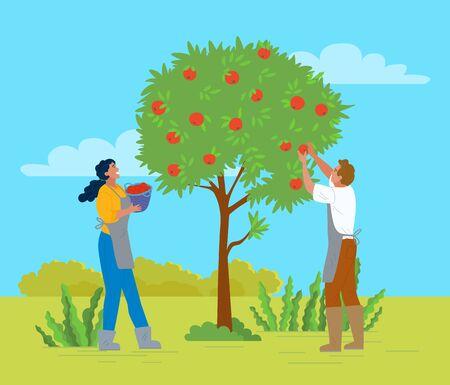 People working in garden vector, apple trees growing in yard. Farmers with basket gathering fruits. Harvesting season, seasonal works in summer flat style. Pick apples concept. Flat cartoon