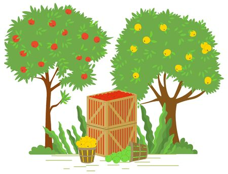 Fruits in containers vector, apple tree garden flat style. Yard with organic production, wooden box with picked products, harvesting season in farm. Picking apple concept. Flat cartoon Фото со стока - 129655839