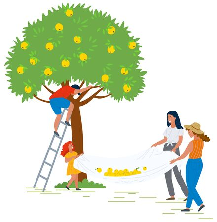 People harvesting vector, man and woman picking apples in garden. Ladies holding cloth, flat style characters in farm. Farmers in yard by tree autumn. Pick apples concept. Flat cartoon