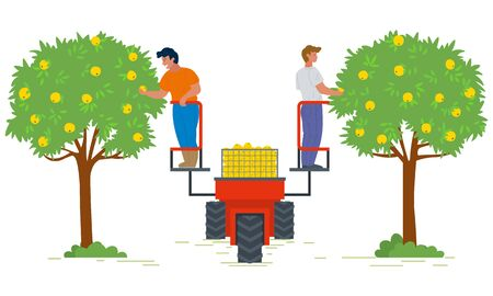 People on lifting machine vector, garden harvesting flat style farming. Apple trees with fruits, seasonal works. Machinery for picking organic products. Picking apples concept. Flat cartoon