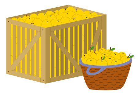 Harvesting in farm vector, isolated wooden container with yellow ripe apples. Flat style products organic food in basket for market. Agriculture farming. Picking apples concept. Flat cartoon