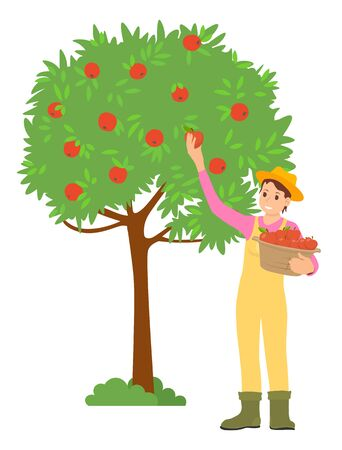 Farming woman picking apples in garden vector, isolated female wearing farm clothes and hat. Fruits gathering, harvesting season worker flat style. Pick apples concept. Flat cartoon Иллюстрация