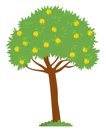 Harvesting season vector, isolated apple tree with yellow fruits. Foliage on branches, bushes on ground, summer or autumn. Natural production garden. Picking apples concept. Flat cartoon Иллюстрация